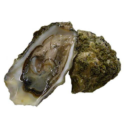 Picture of Oysters, Fanny Bay