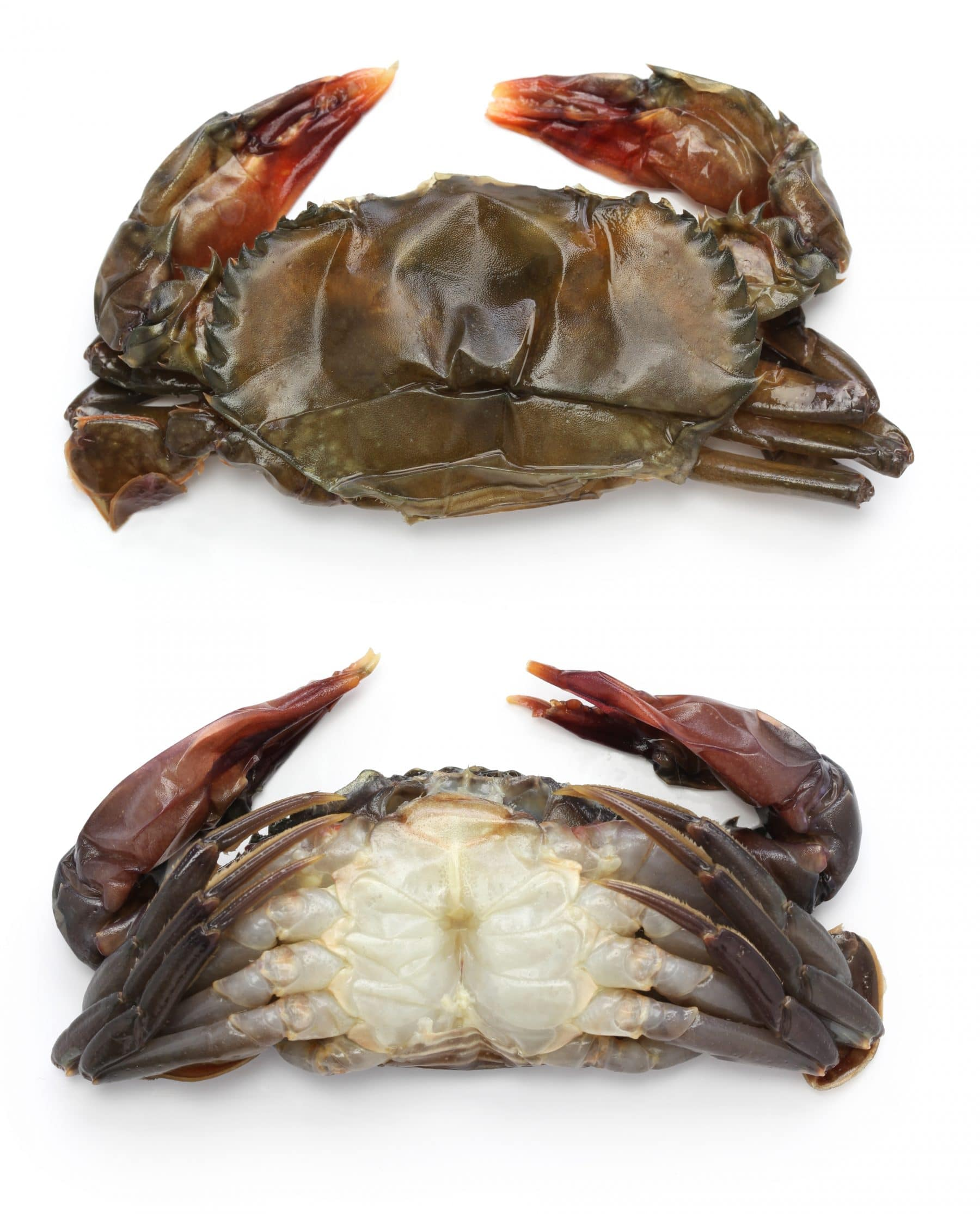 Picture of Crabs, Soft Shell