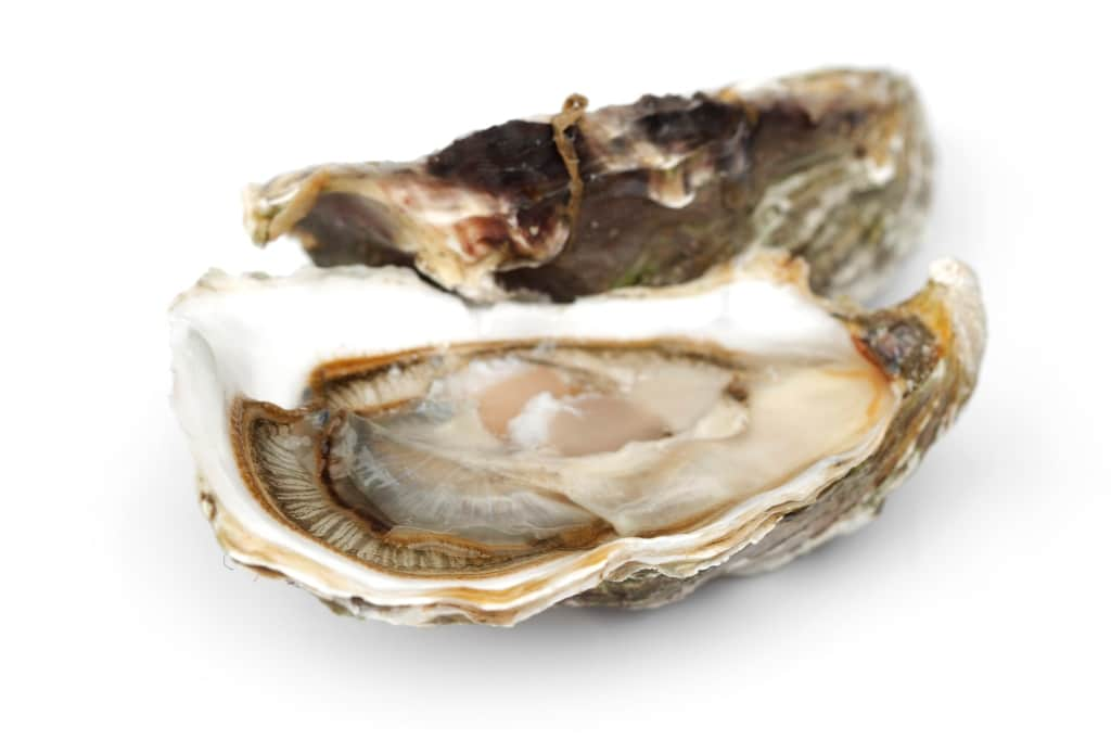 Picture of Oysters, Raspberry Point