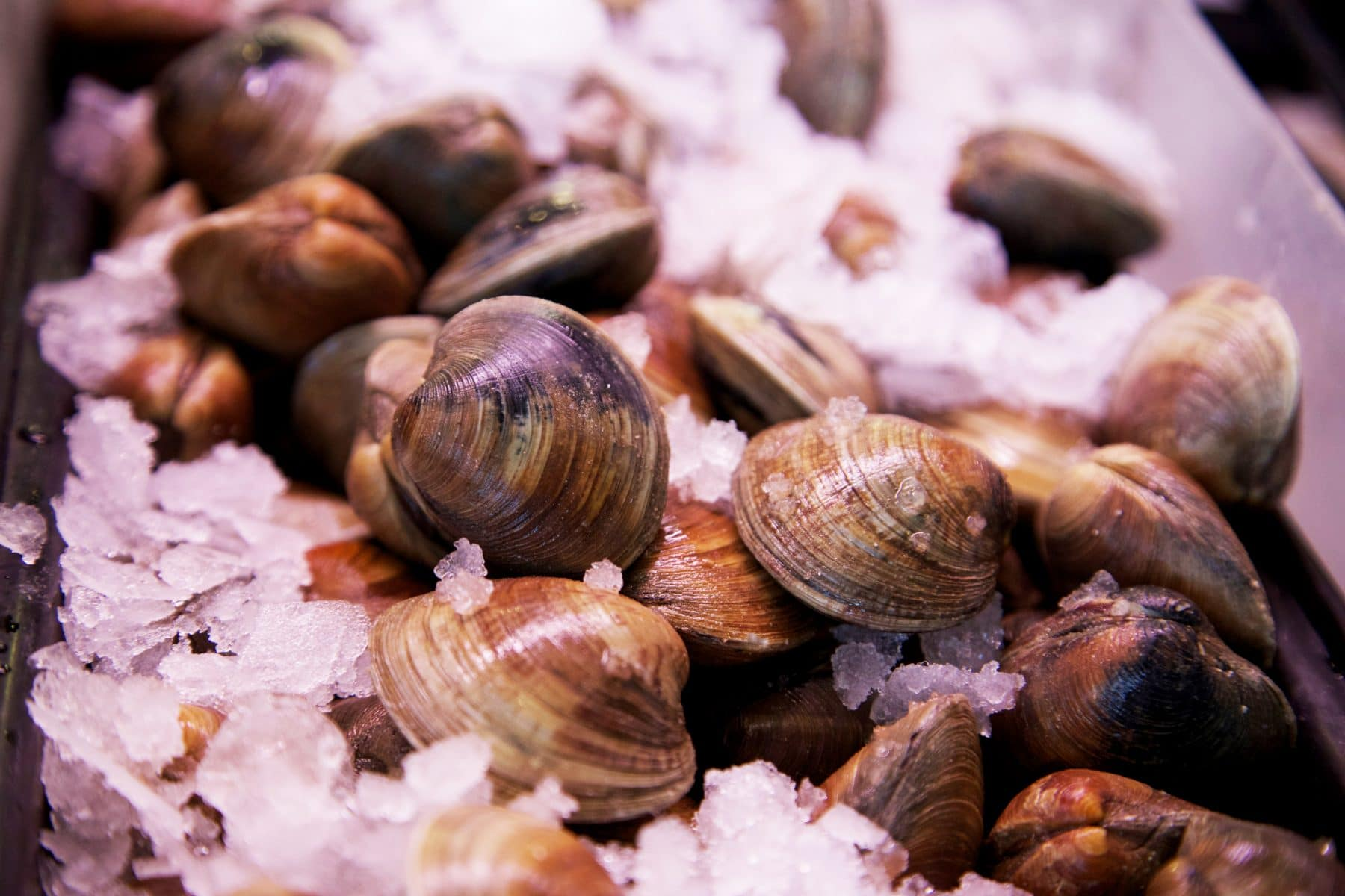Picture of Clams (Hard Shelled, Farmed)
