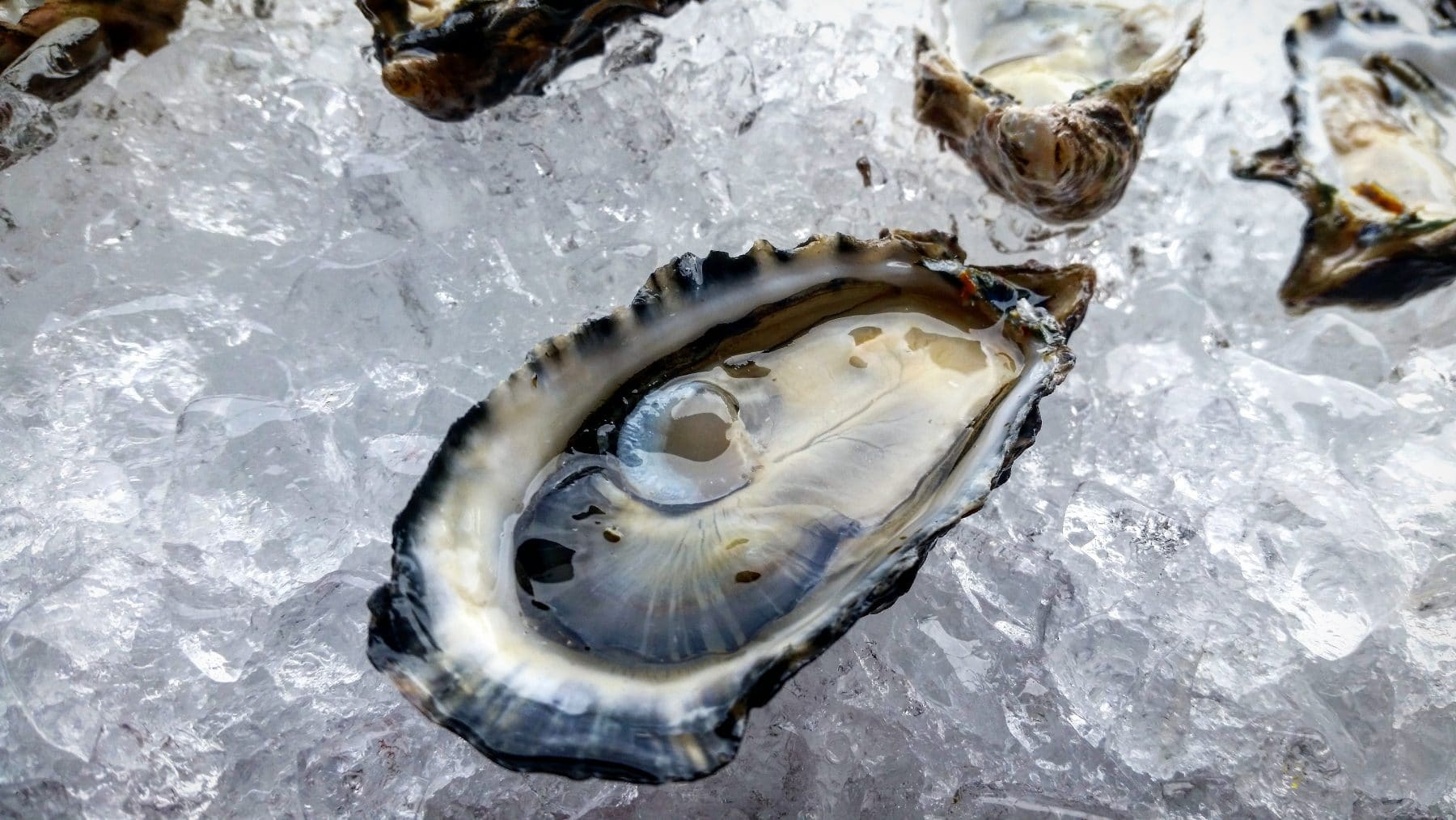 Picture of Oysters, Pacific Gold